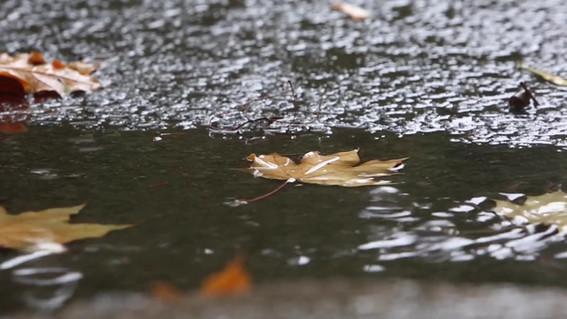 Fall Puddles