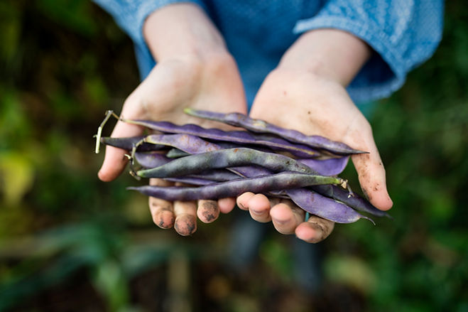 新鮮なランナー豆