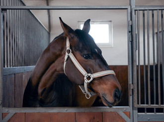 Four Must-Have Minerals In The Horse's Diet