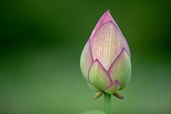 花のつぼみ
