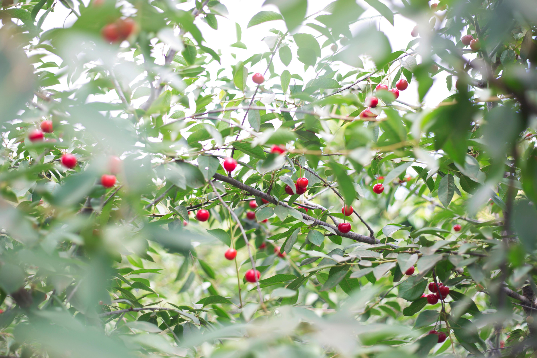 Garden-Making 5: The Forest Garden