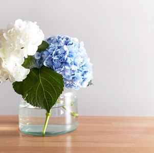 How To Get A Hydrangea To Hold In A Bouquet