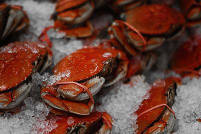 Krabben op ijs