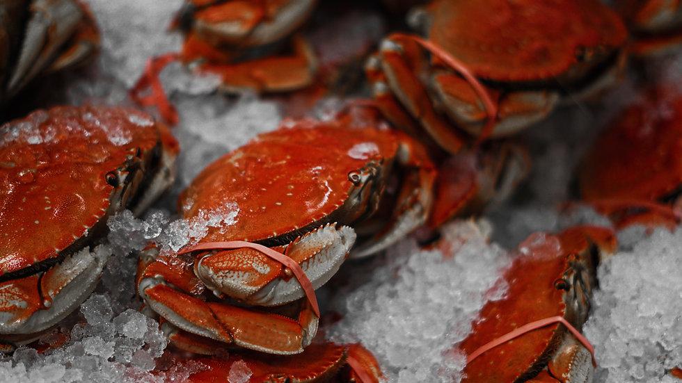 Premium Seafood Case