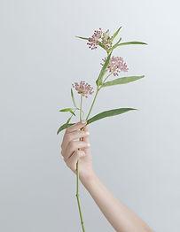 Direction des fleurs