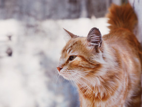6 Tips for Traveling with Cats