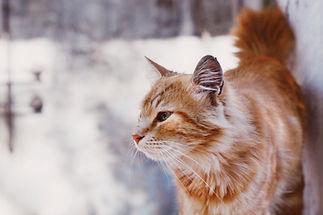 창 밖으로 고양이보고