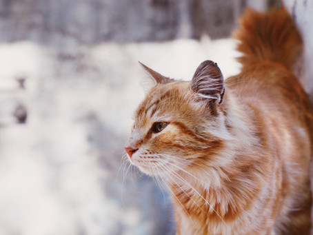 Caring for Outdoor Cats