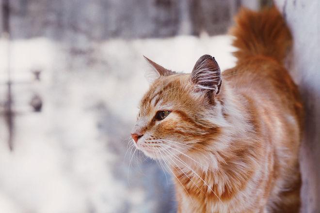 Katze, die aus Fenster heraus anstarrt