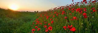 Zonsondergang over Poppy Field