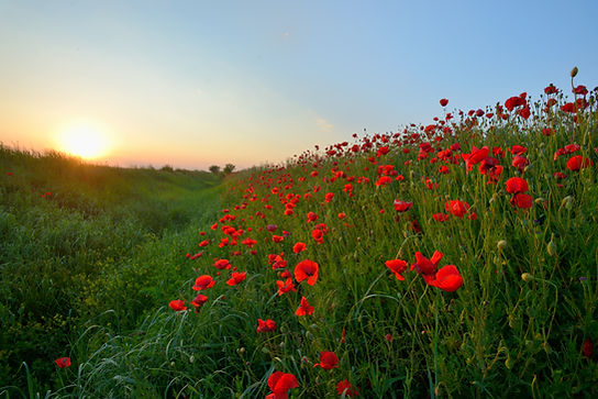 Sonnenuntergang über Poppy Field
