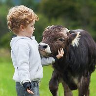Boy with Calf
