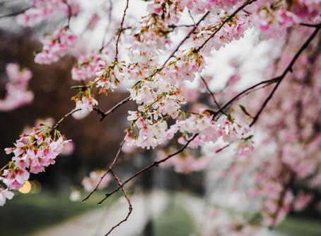 Le printemps :s'éveiller en douceur au rythme de la nature