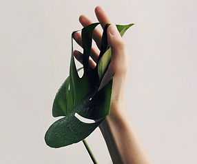 Hand and Leaf