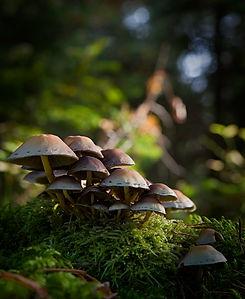 teffit- terapie forestali - corso terapie forestali - immersione in foresta -