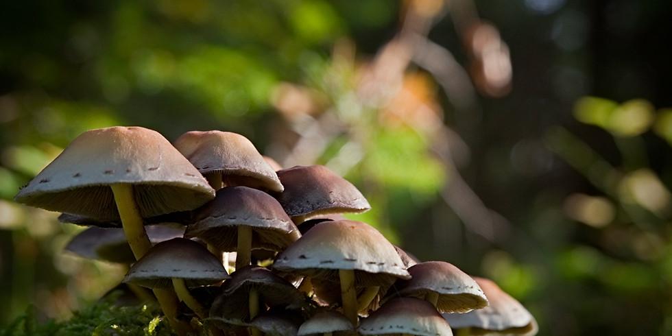 Fungi Foray Walk and Talk