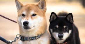 【国内初】感染者飼い主から預かった犬2匹、PCR検査の結果「新型コロナ陽性」