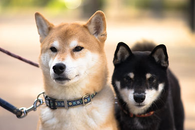 Two Dogs
