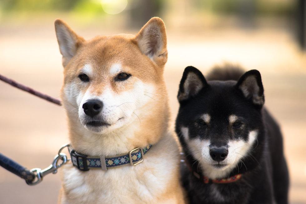 To hunde