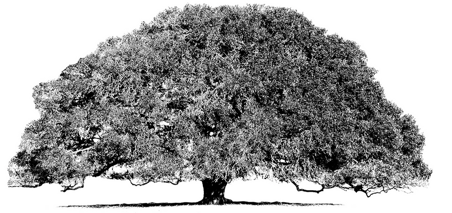 oak_tree_edited.png