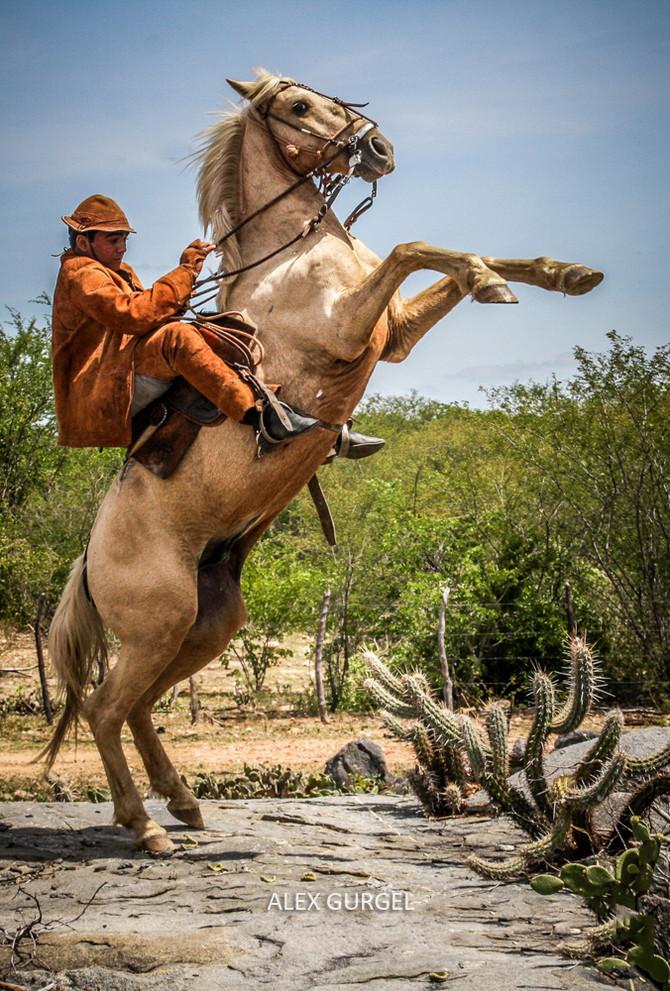 Foto do Vaqueiro de Acari Ganha 1ª Lugar