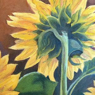 As the Sunflower Turns