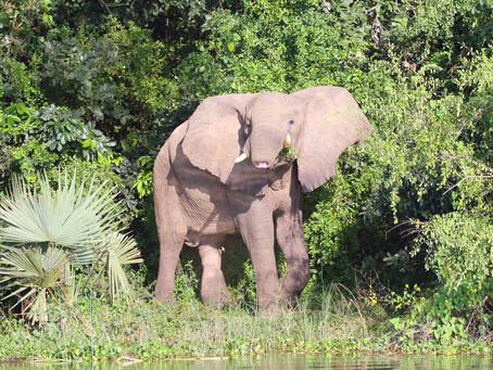Fünf Gründe, weshalb eine Safari besser ist als der Besuch einer Game Lodge
