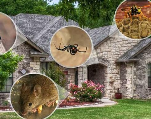 Pest control house.jpg