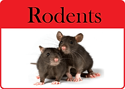 two rats with rodent text.png