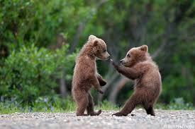 Bear Complex.jpeg