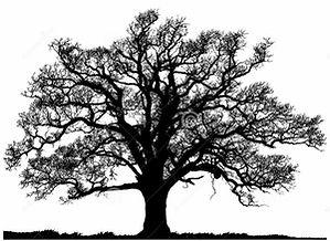 15167360542141647846free-live-oak-clipar