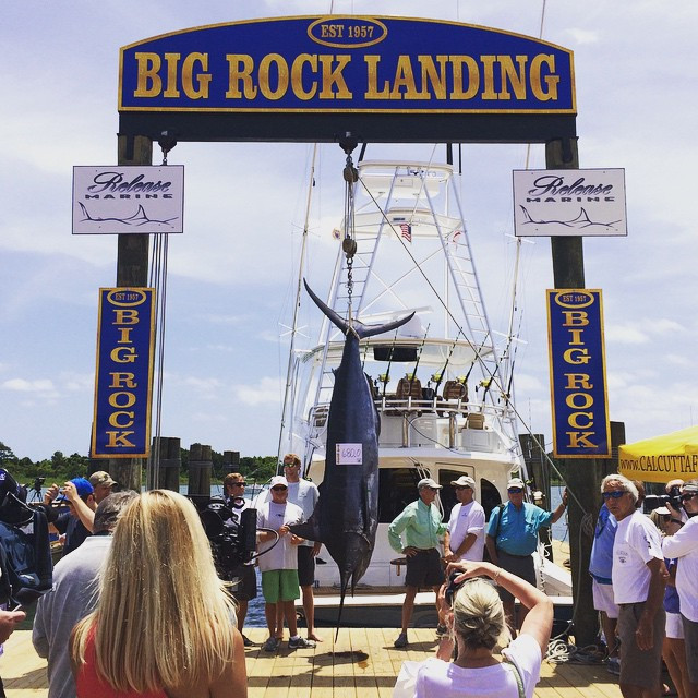 big rock blue marlin tournament on the morehead city waterfront weigh station