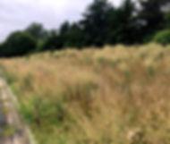 grassbefore_edited.jpg