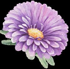 Botanical Pocket
