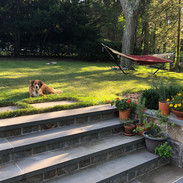Rowley lounging in the backyard