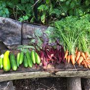 veggies from our garden