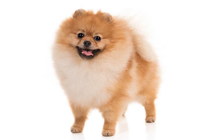 Full groom/small dog