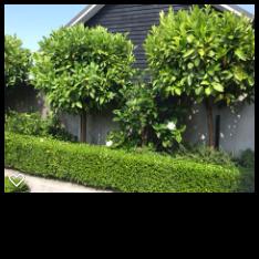 Courtyard1.png