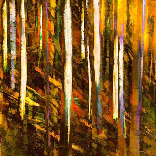 Autumn Forest Colors