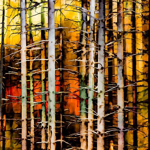 Autumn Tree Trunks