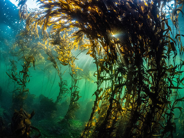 Kelp-background.jpg