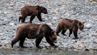 Mum-and-cubs.jpg