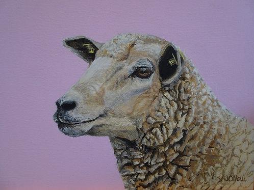 Pink Sheep Print Ltd edition