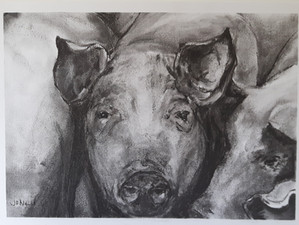 Original charcoals for sale