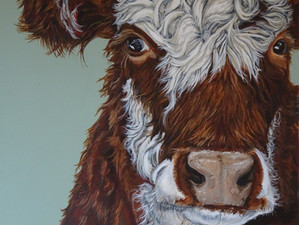 Curly cow...the latest work