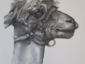New Charcoal Pictures