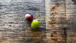 Olives 11-16-19-6184-2