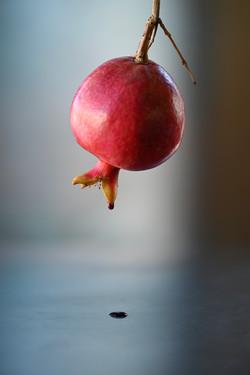 Pomegranate 11-03-19-5210