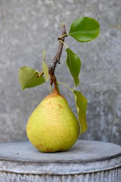 Pear-Apple 09-22-19-1996