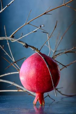 Pomegranate 11-03-19-4656